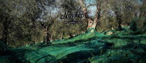 casa-novaro-vacanze-imperia-oliveto